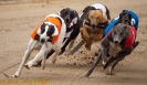 2011_07_SPS Belle Vue Dogs_006
