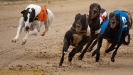 2011_07_SPS Belle Vue Dogs_010