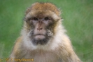 2007_08_Monkey_Forest_Trentham_008-1