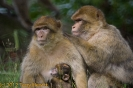 2007_08_Monkey_Forest_Trentham_012-2